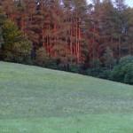De laatste zonnestralen in het bos